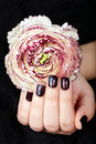 Hands with short manicured nails colored with dark purple nail polish and flower