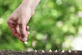 Hand sowing seeds in vegetable garden soil, close up on gree