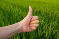 Hand with thumb up infront of field in front green paddy background Stock Photos