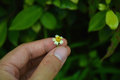 Hand touch a little flower. take care of nature. Royalty Free Stock Photo