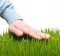 Hand touching grass human s fresh Stock Photography