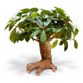 Hand tree Stock Photos