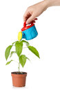 Hand watering a plant Royalty Free Stock Photo