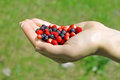 Hand with Wild Berries Royalty Free Stock Photos