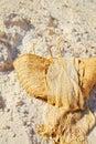 Handbag female of straw on sand Stock Photography