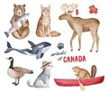 stock image of  `Animals of Canada` watercolor illustration set.