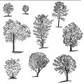 Handdrawn set of ink trees. Set of sketched illustrations. Black ink and brush sketches of spruce for cards and package