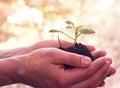 Handen die een jonge plant houden Royalty-vrije Stock Foto