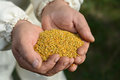 Handful of bee pollen. vitamins and minerals. Royalty Free Stock Photo