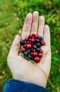 Handful of different berries from Finland Royalty Free Stock Photo