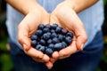 Handful of fresh blueberries Royalty Free Stock Photo