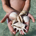 Handful of seashells fiji south pacific teenage girl holding a selection tropical in the Royalty Free Stock Images