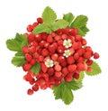 Handful of wild strawberries Royalty Free Stock Photo