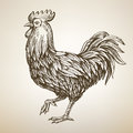 Handmade drawing Rooster