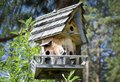 Handmade Wooden Birdhouse in the Forest Royalty Free Stock Photo