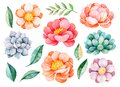 Handpainted watercolor peonies, flowers, succulents,branch and leaves.