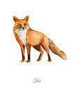 Handpainted watercolor poster with fox