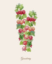 Handpainted watercolor poster with gooseberry