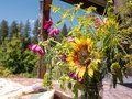 Handpicked wildflowers in vase on patio Royalty Free Stock Photo