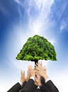 Hands of business people holding green old tree with eco concept Stock Photography