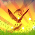 Hands catching dove for peace abstract symbol Royalty Free Stock Images