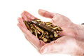 Hands full of ammo a heap mm pistol bullets holded by human isolated over a white backgrounds Royalty Free Stock Images