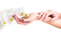 Hands of the girl holding an orchid on isolated white gentle with beautiful manicure carefully background Stock Photos