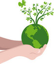 Hands with a green globe Stock Image