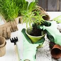 Hands in green gloves plant a flower in pot. Gardening concept Royalty Free Stock Photo