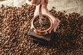 Hands grinding on a manual grinder fragrant coffee beans. Top view. Selection of fresh coffee for espresso Royalty Free Stock Photo