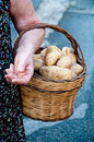 Hands holding a basket containing potatoes Royalty Free Stock Photo