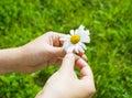Hands holding daisy Royalty Free Stock Photo