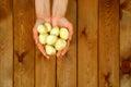 Hands holding fresh potatoes close up shoot Royalty Free Stock Photo
