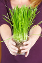 Hands holding grasses Royalty Free Stock Images
