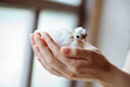 Hands holding little pigeon consept of innocence mother and daughter Royalty Free Stock Photos