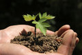 Hands holding sapling Stock Photos