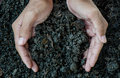 Hands holding soil, Organic fertilizer Royalty Free Stock Photo