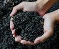 Hands holding soil, Organic fertilizer Royalty Free Stock Photo