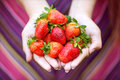 Hands holding strawberries women s ripe macro Royalty Free Stock Image