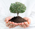 Hands holding a tree with money concept Stock Photo