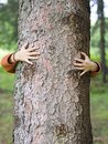 Hands hugging tree Royalty Free Stock Photo