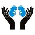Hands with human kidneys vector symbol.
