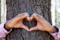 Hands making an heart shape on a trunk of a tree. Royalty Free Stock Photo
