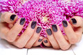 Hands with manicure and pink flower closeup fingernails dark fashion cupped woman beautiful manicured holding flowers Royalty Free Stock Photography