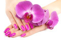 Hands with pink orchid isolated female fragrant Royalty Free Stock Photos