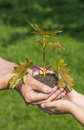 Hands planting a little tree Royalty Free Stock Photo