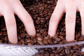 Hands playing with coffee beans beautiful woman Royalty Free Stock Image