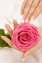 Hands with a rose Royalty Free Stock Photos
