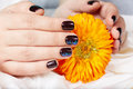 Hands with short manicured nails colored with dark purple nail polish holding a flower