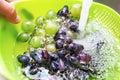 Hands washing a fresh grapes Royalty Free Stock Photo